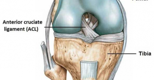 Anterior crucitiate ligament ruptures – non-operative or surgical intervention?